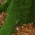 Briófitas vivendo em um tronco de árvore.