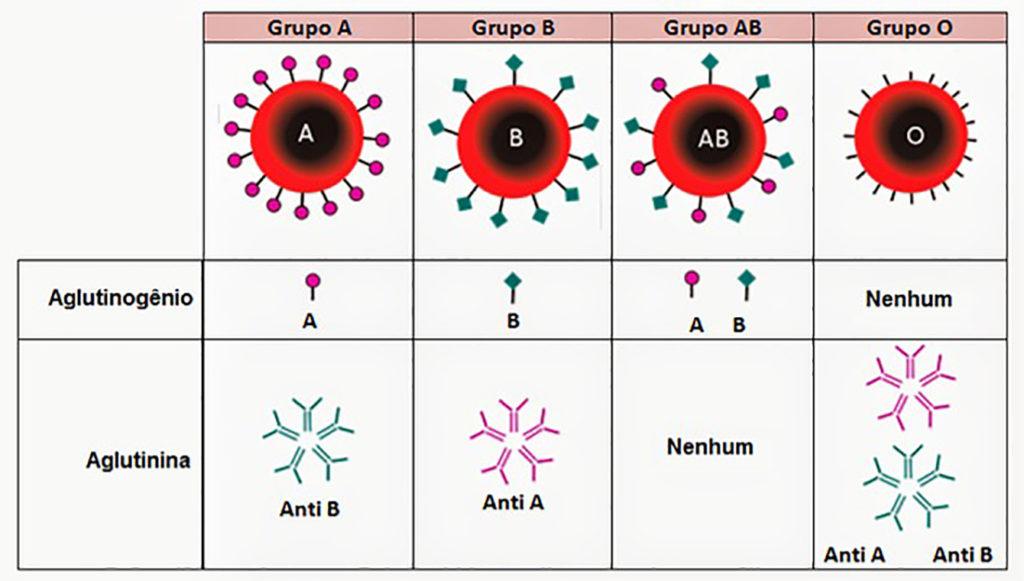 Sistema ABO - Tipos sanguíneos com respectivas aglutinina e aglutinogênio