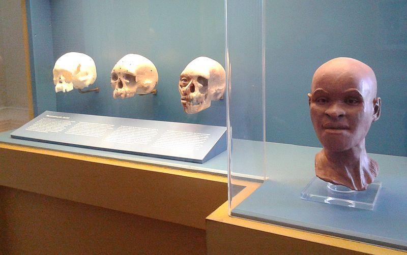 Reconstituição do rosto de Luzia com base no crânio encontrado na década de 70. O fóssil humano seria o mais antigo encontrado nas Américas, com cerca de onze mil e quinhentos anos foi descoberto durante escavações na região de Lagoa Santa em Minas Gerais.