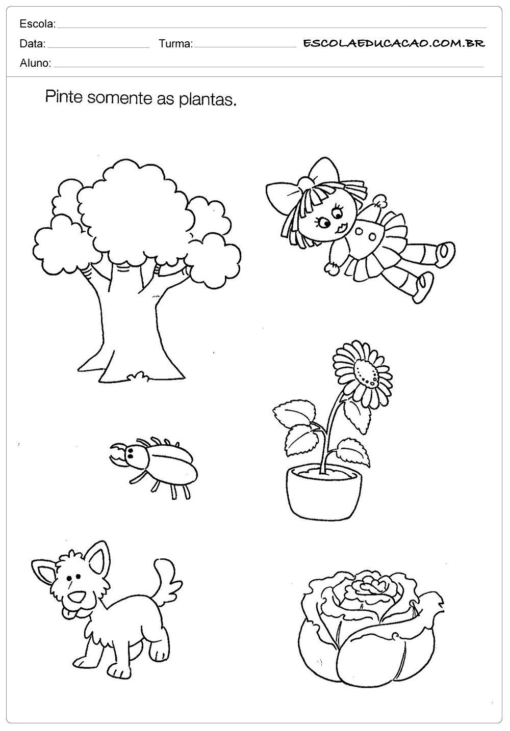 Atividade de Ciências para Educação Infantil – Pintando as Plantas