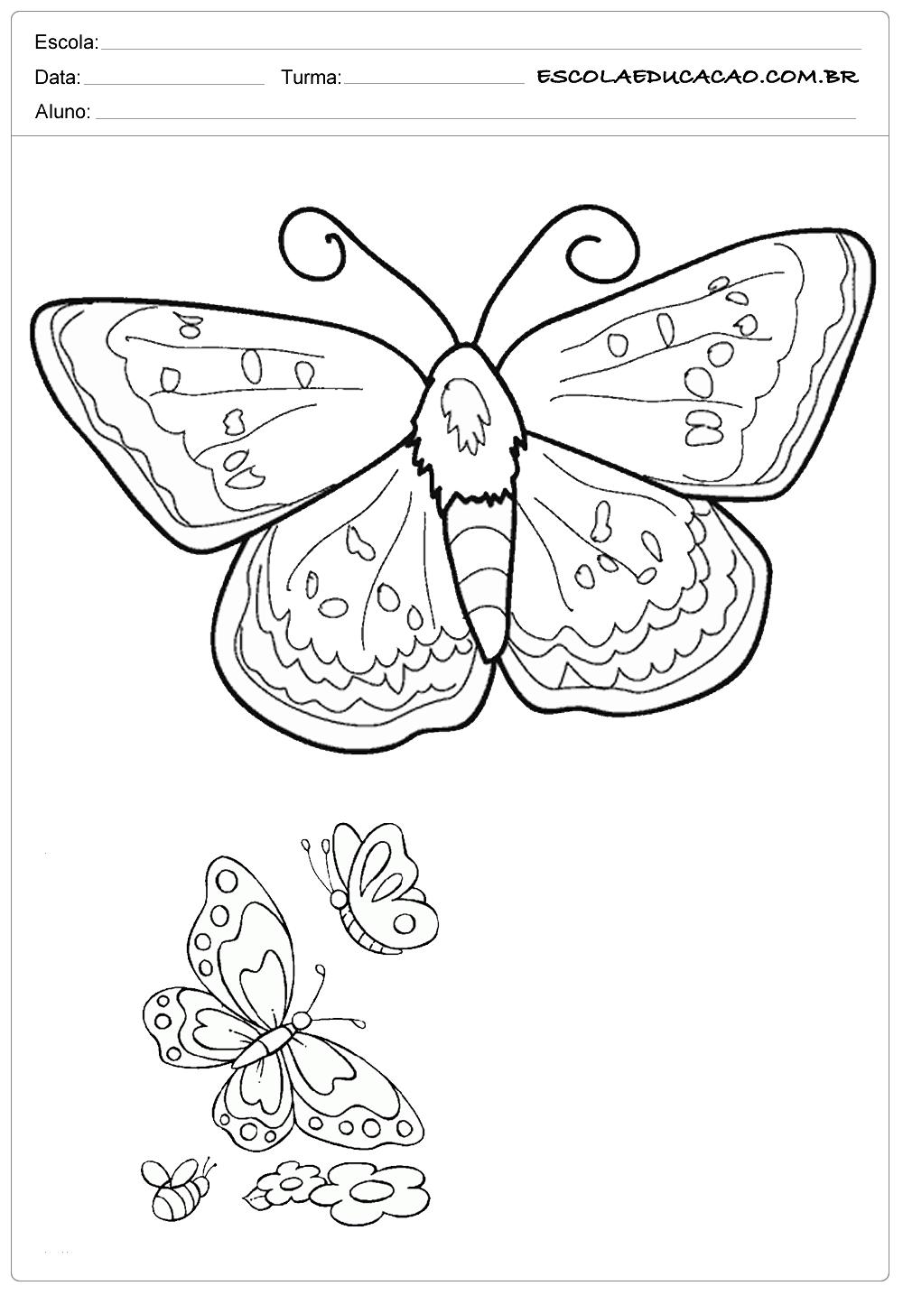 Atividades E Desenhos De Animais Para Colorir Borboletas