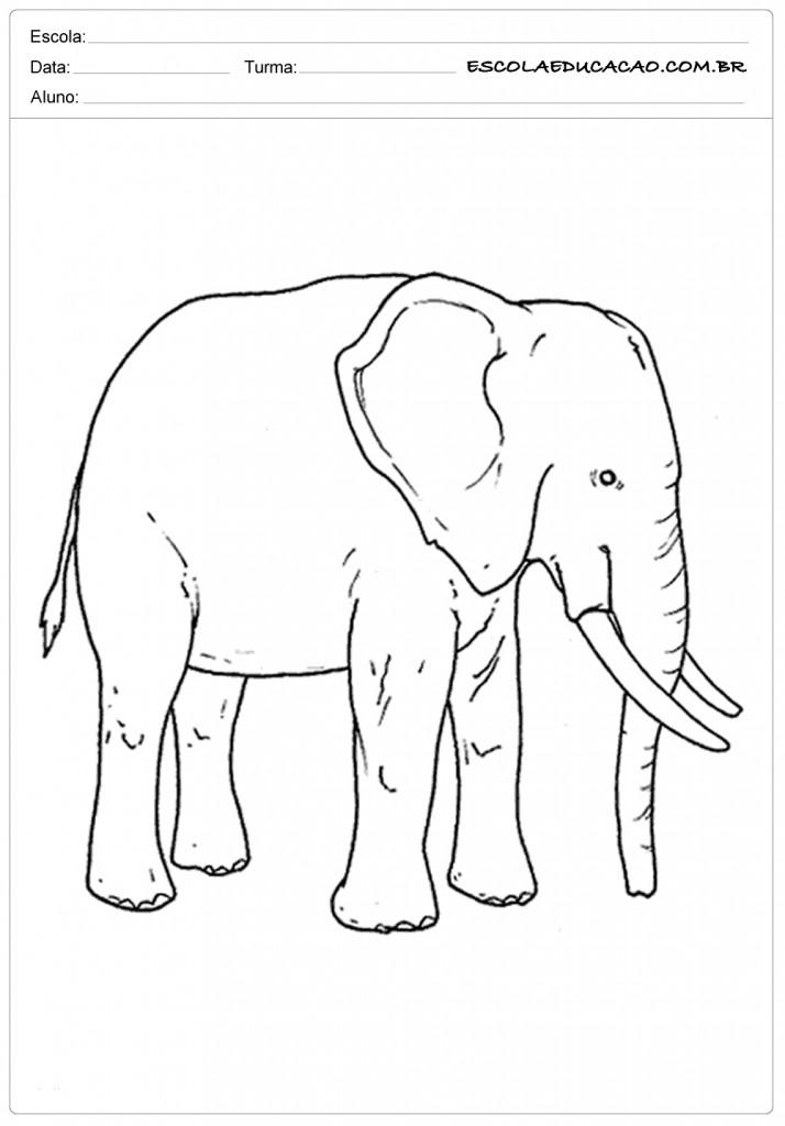 Atividades e Desenhos de Animais para Colorir - Elefante