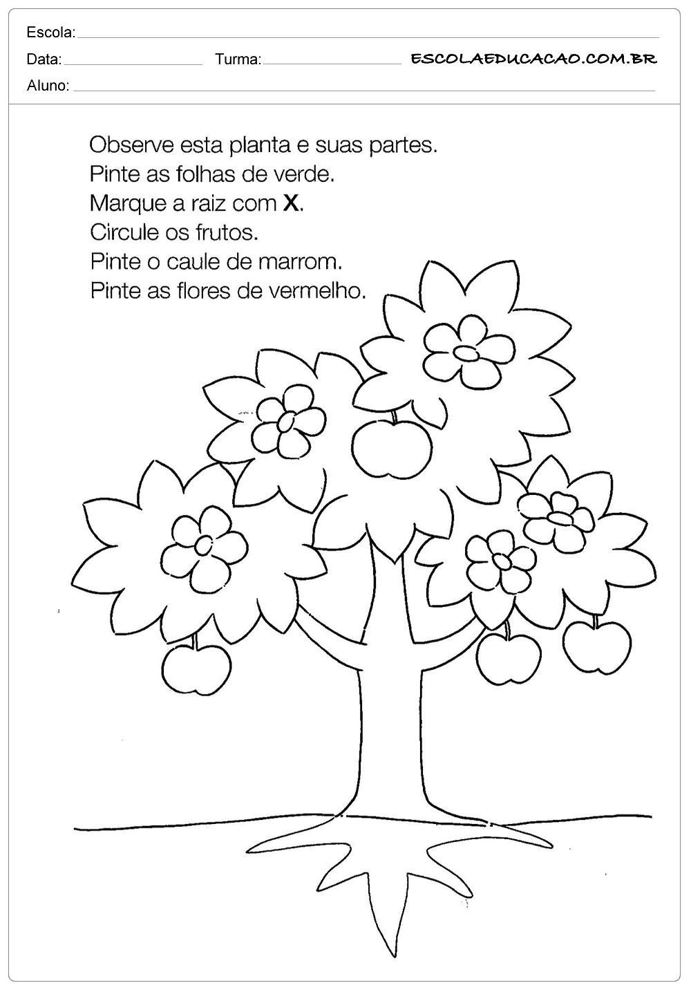 Atividades Dia da Árvore – Observe a Planta