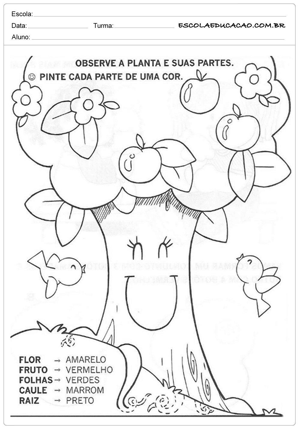 Atividades Dia da Árvore – Pinte a Árvore