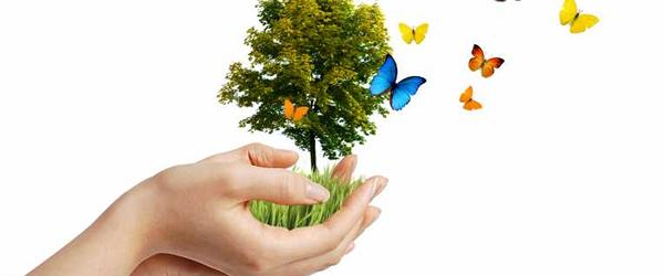 Atividades Dia da Árvore