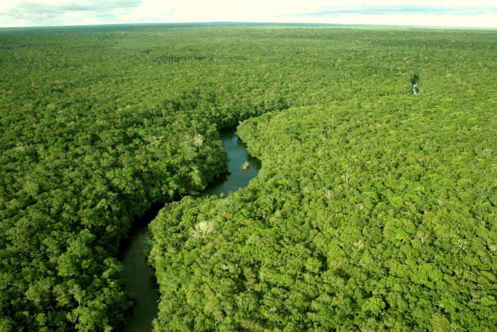 Domínio amazonico