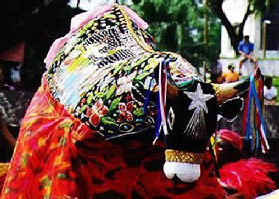 Bumba-meu-boi festa típica do Estado do Maranhão.