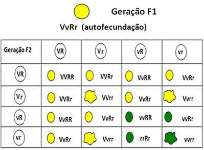 Interpretação da geração F2 da Segunda Lei de Mendel