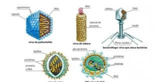 Estrutura dos vírus