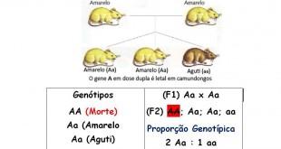 Proporção 2:1 causada por um gene letal em camundongos