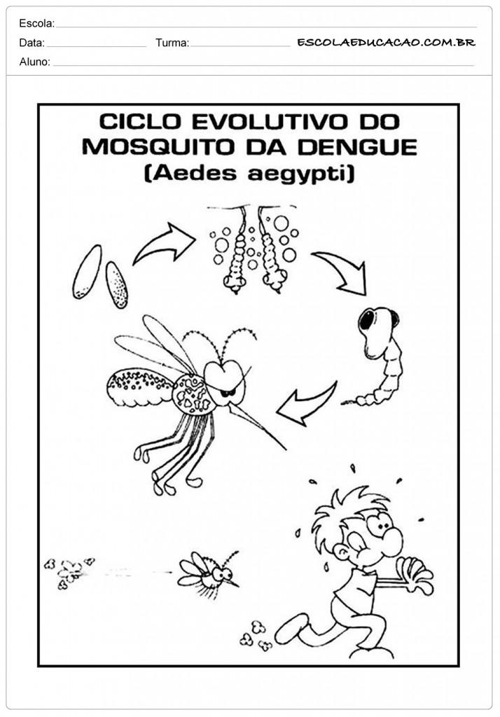 Ciclo de vida da dengue