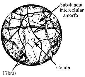 Esquema de uma célula do tecido conjuntivo propriamente dito