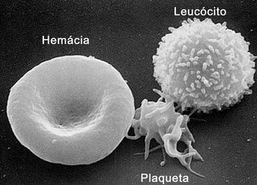 Imagem de microscopia de transmissão de uma hemácia, um leucócito e uma plaqueta