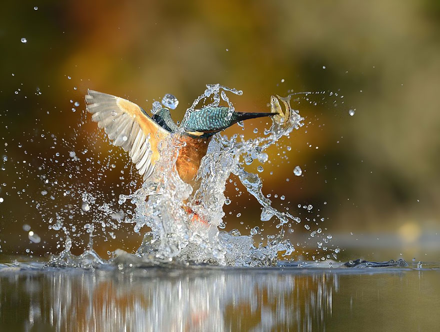 Foto de Kingfisher