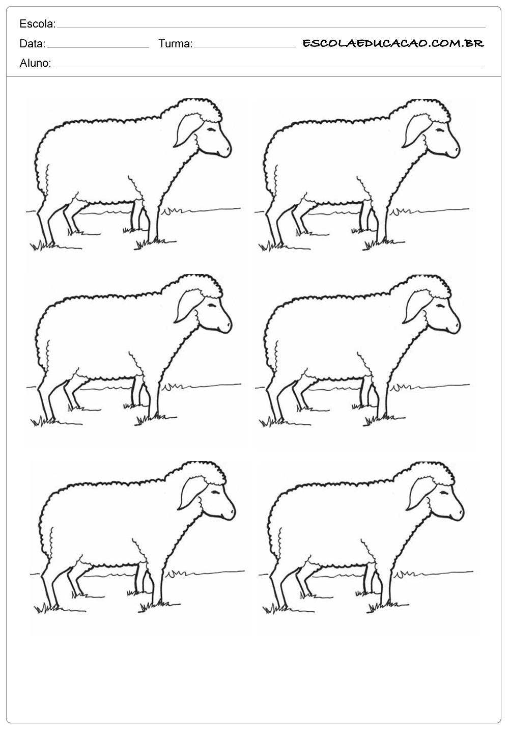 6 ovelhas no campo