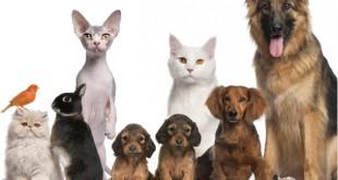 Projeto animais educação infantil - Para Imprimir