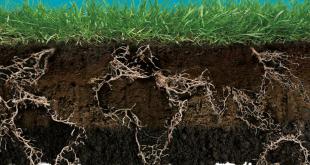 Os fatores de formação dos solos