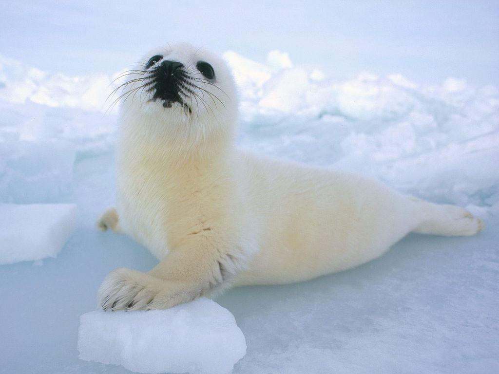 Concurso Animal endotérmico vivendo em ambiente com baixas temperaturas