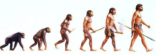 Evolução Humana Diagrama