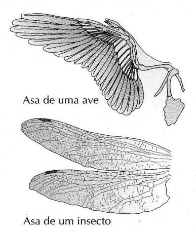 asa de uma ave e de um inseto