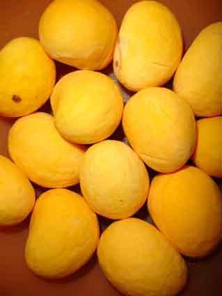 Fruto do pequizeiro