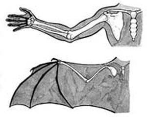 mão do homem e a asa do morcego