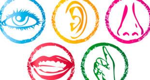 Atividade sobre os cinco sentidos para educação infantil