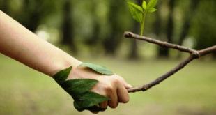 Atividades sobre o meio ambiente para o 3º ano