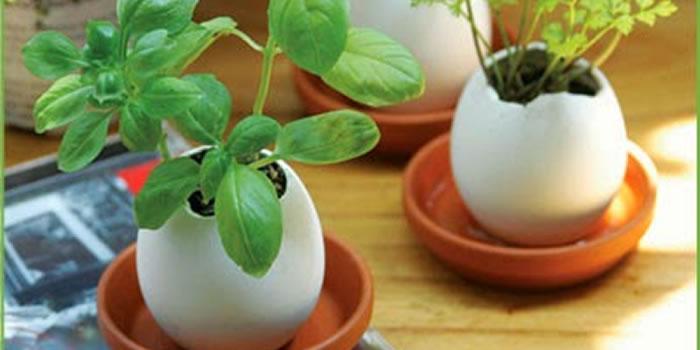 Ensinando sobre a importância da água para as plantas