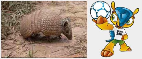 Tatu-bola (Tolypeutes tricinctus) e o Fuleco, sua representação mais famosa.