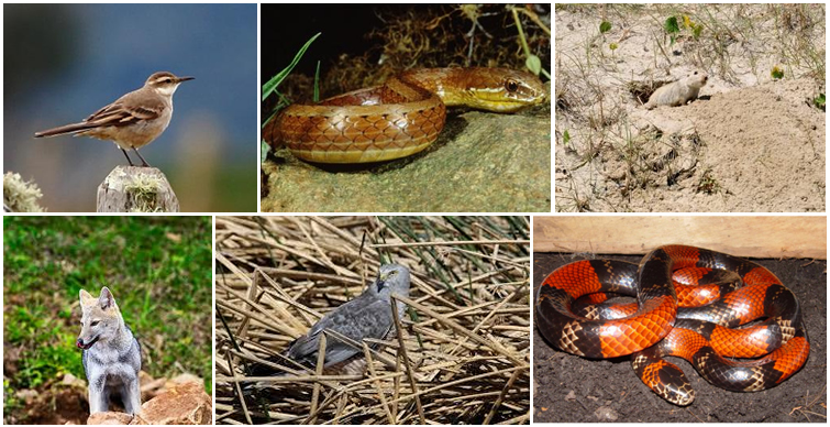 Algumas espécies ocorrentes nos pampas