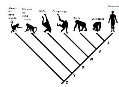 Um exemplo clássico de cladograma