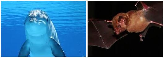 Golfinhos e morcegos