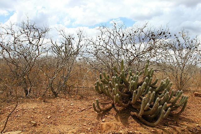 Paisagem típica da Caatinga