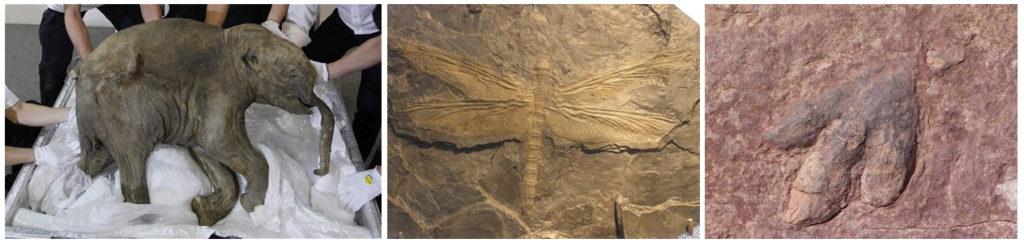 Exemplos de fósseis
