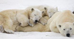Hibernação