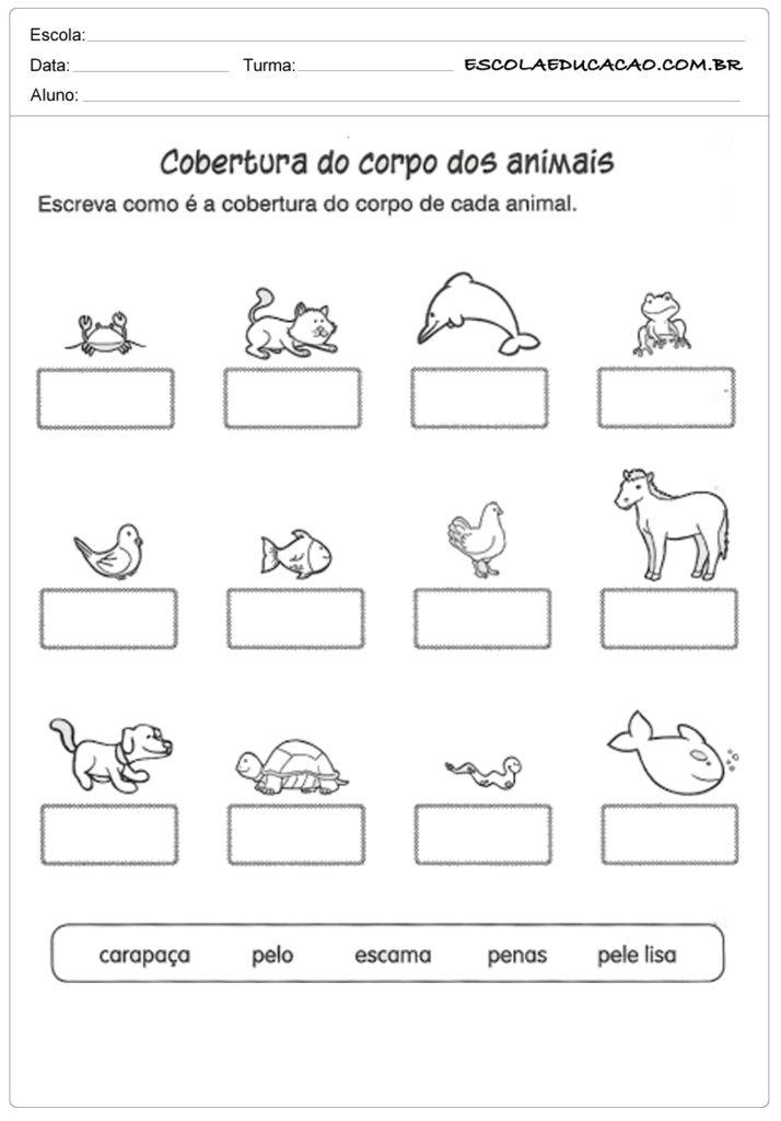 Atividades de ciência cobertura do corpo dos animais