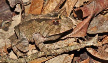 Animais em fase de extinção no Brasil - Sapo Folha