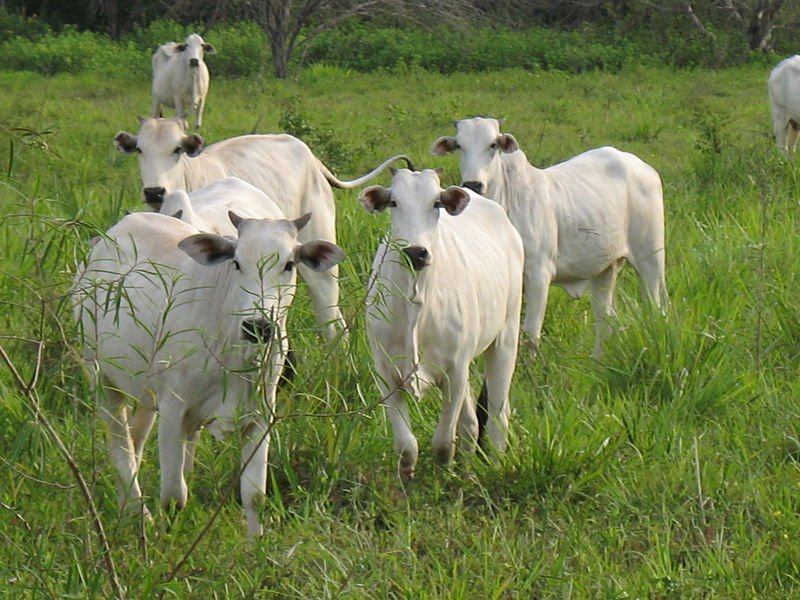 Fazenda com Animais no Pantanal