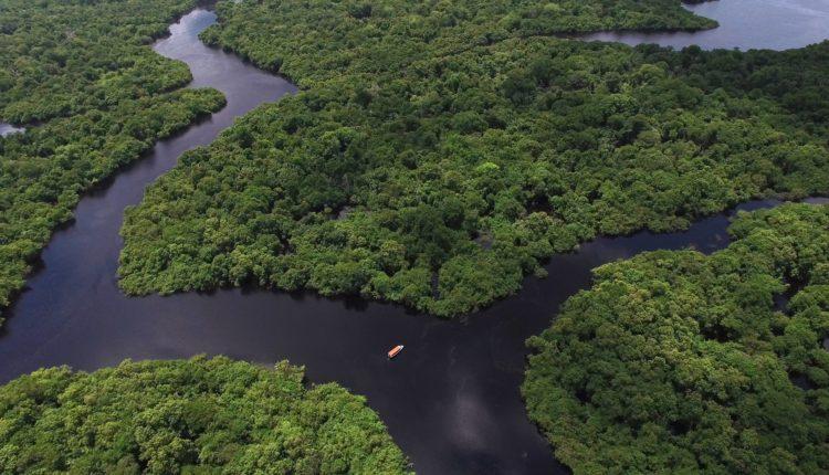 Floresta Amazônica: Biomas, Animais, Imagens, Estados, Fauna e Flora