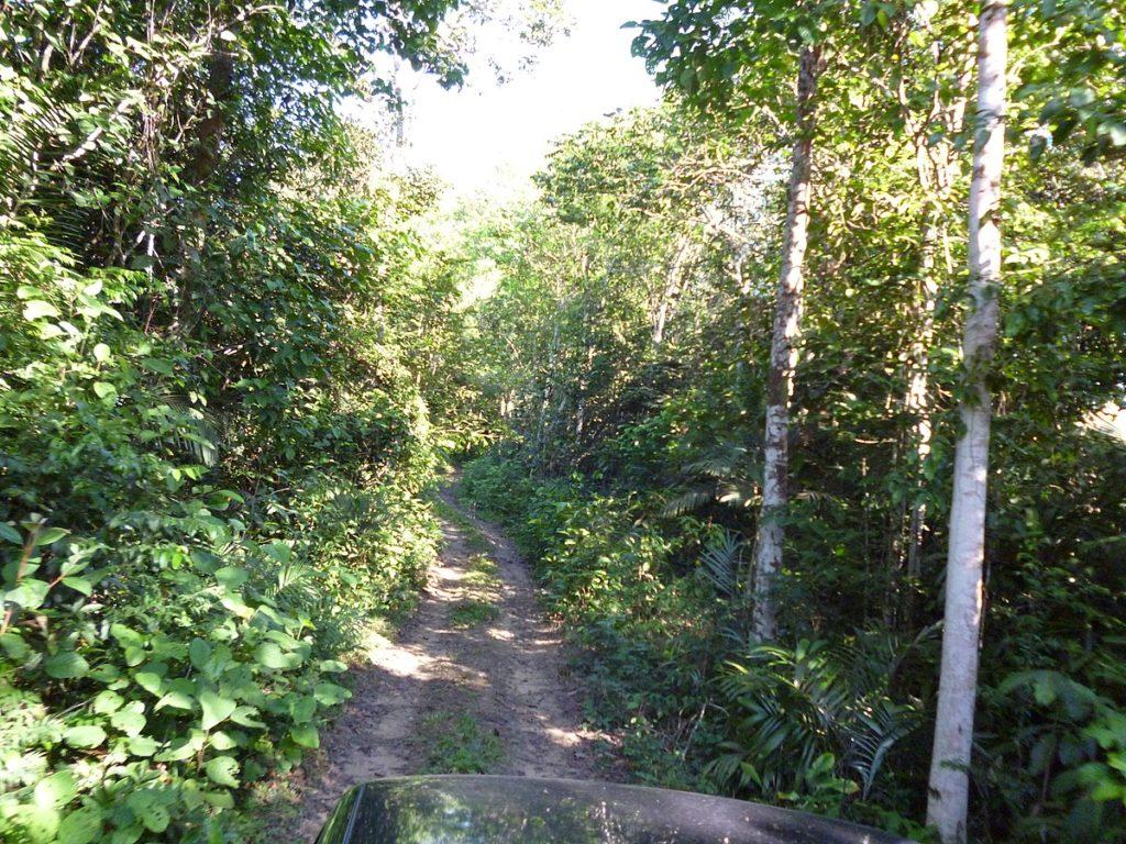 Árvores de grande porte são encontradas na floresta amazônica