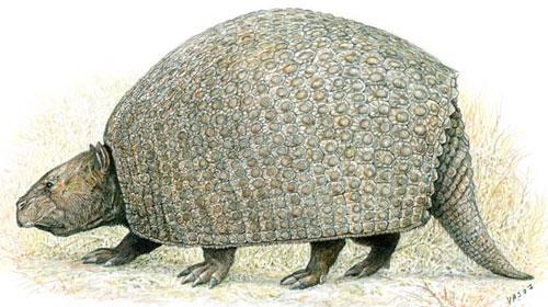 Megafauna brasileira: Gliptodonte