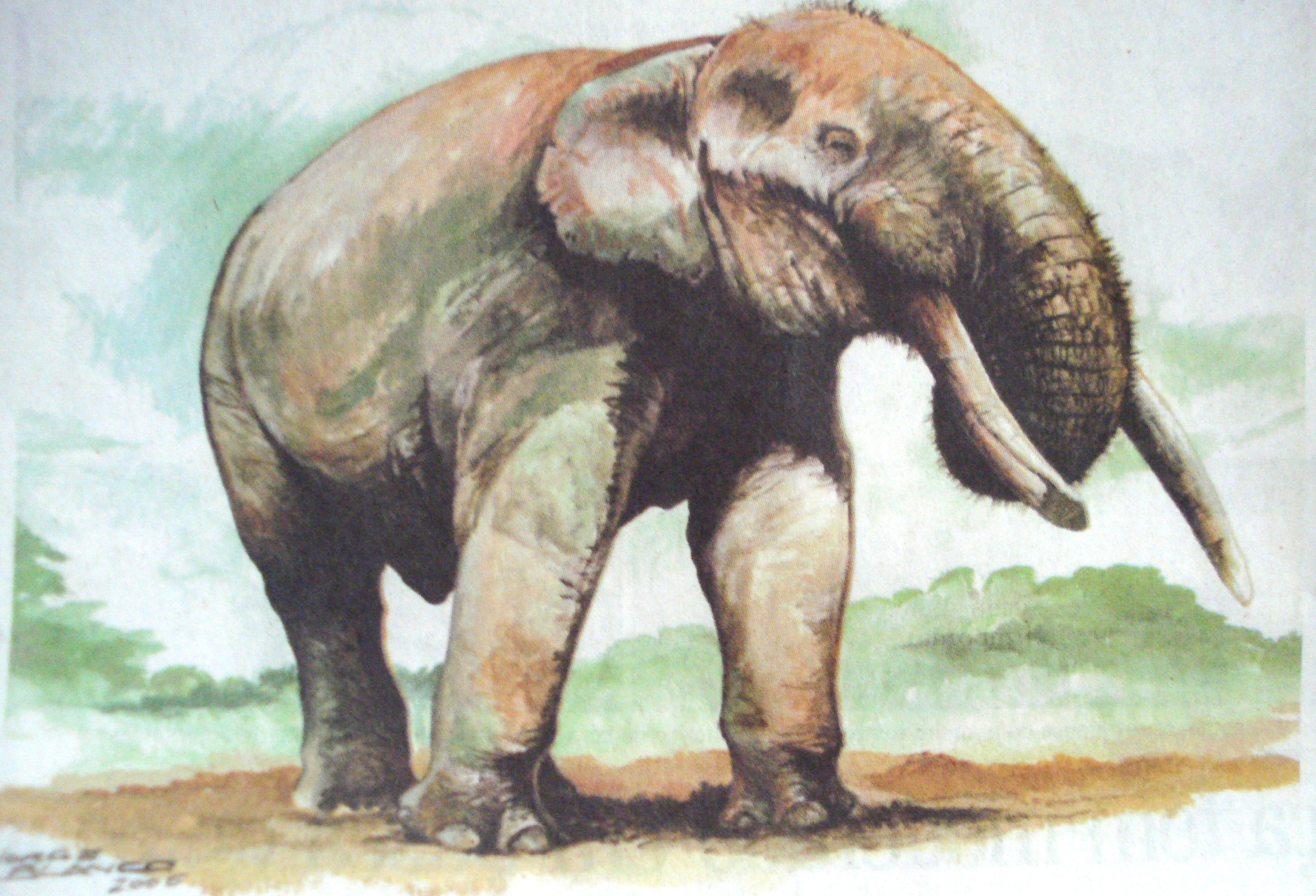 Megafauna brasileira: Mastodonte