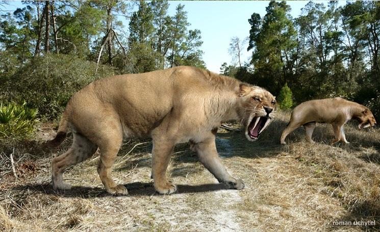 Megafauna brasileira: Tigre-dentes-de-sabre