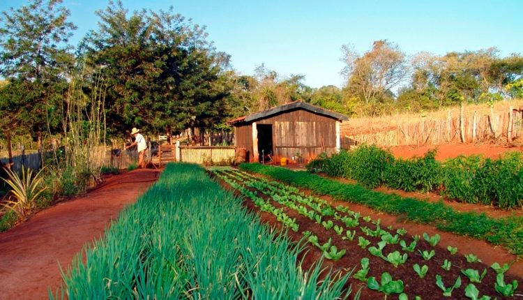Projeto Horta na Escola - Passo a Passo - Justificativa e Objetivos