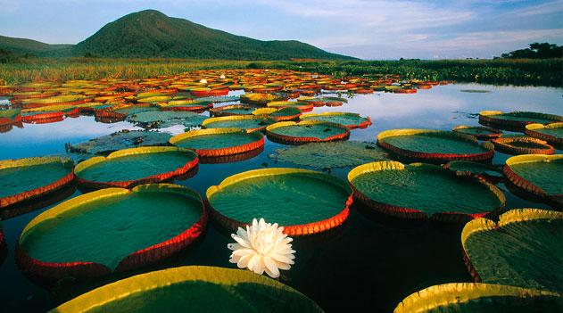Saiba tudo sobre o bioma Pantanal