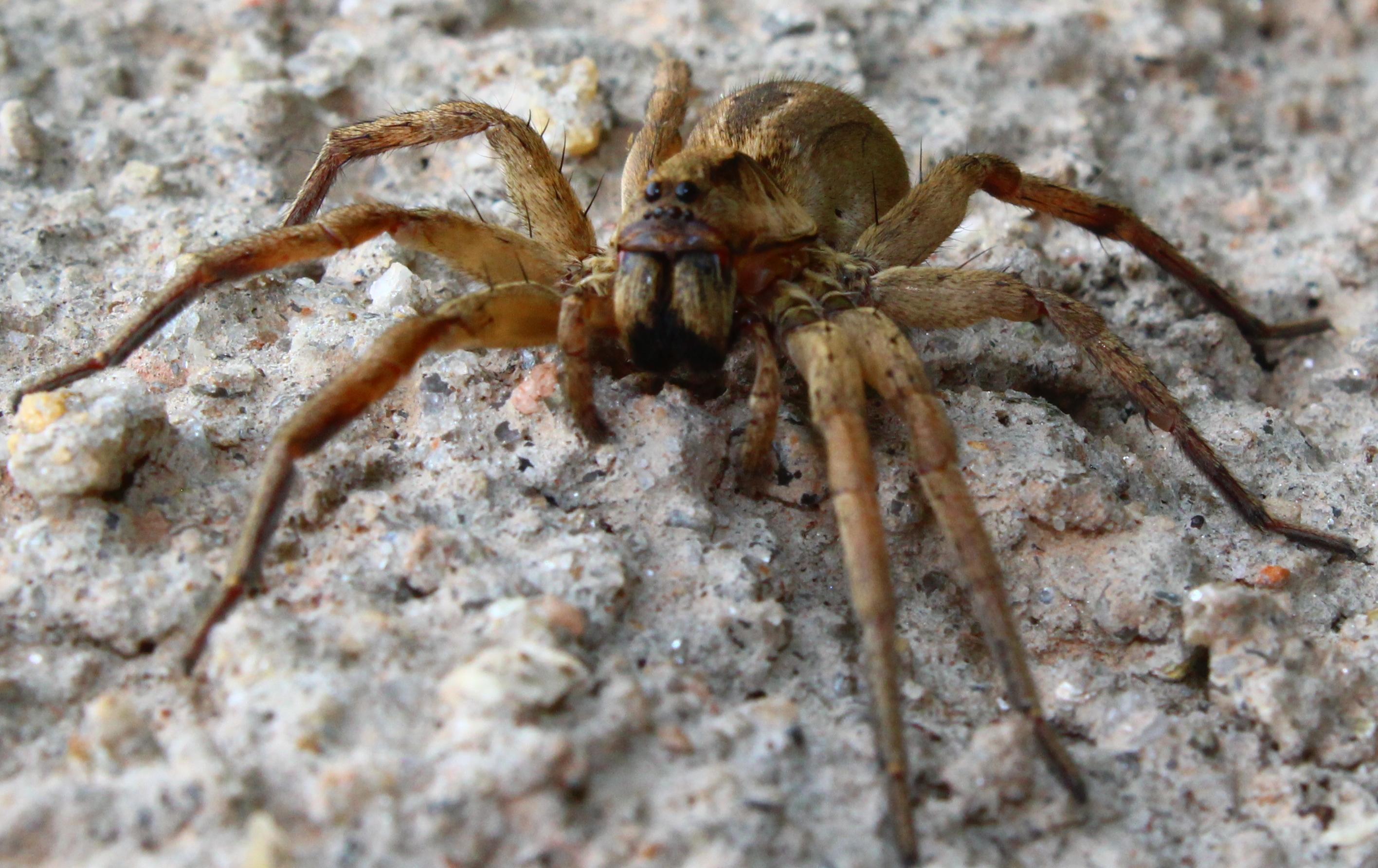 aranha é conhecida por ser um dos animais nocivos ao ser humano