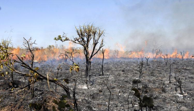 Plano de Aula sobre queimadas - Meio Ambiente