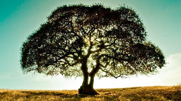 Projeto Dia da Árvore - 21 de setembro