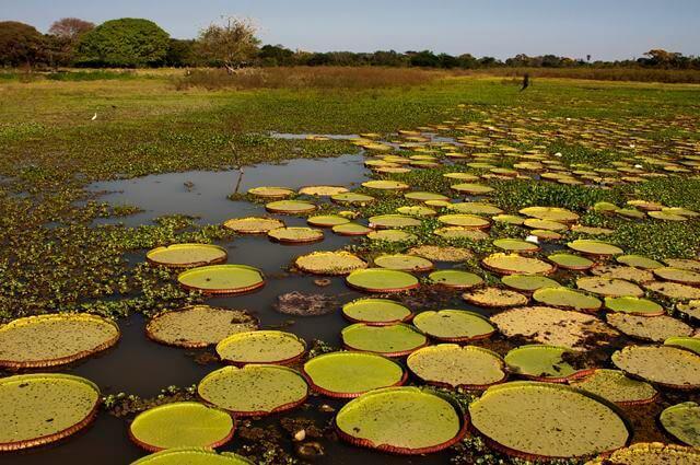 Clima presente no Bioma Pantanal